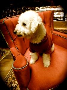 Rustom Velvet Chair